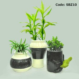 House Plant With Pot-SBZ10
